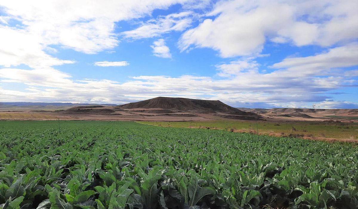 Las Bardenas (Navarra)